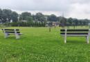 Camperen naast de koeien in Aarle-Rixtel.